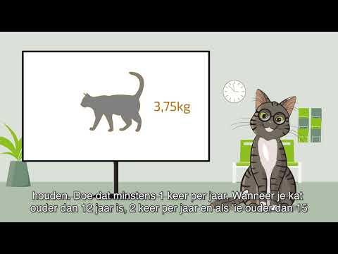 Boehringer Ingelheim - Dokter Kat - Content Strategy