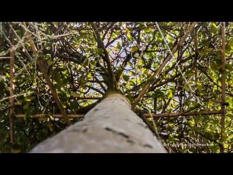 Brainbow promotion - Vidéo